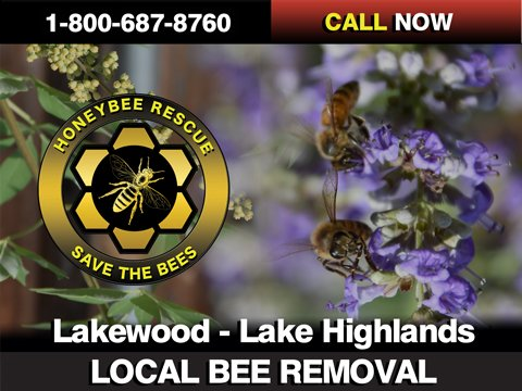 Bee Removal - Lake Highlands